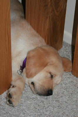 Under the bench legs at 8 weeks
