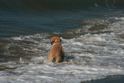 In the ocean surf
