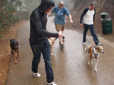Wet dogs and their drenched owners