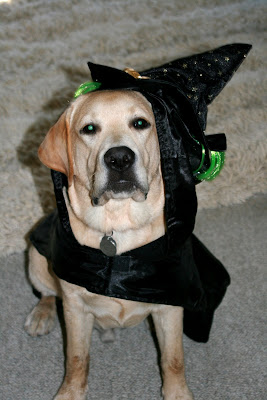 Halloween Cooper so not amused