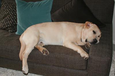 Pup sleepy on the sofa
