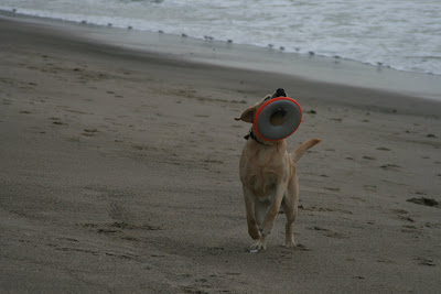 Frisbee beach fun with pup