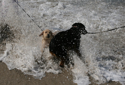 Cooper & Ginger making a splash in the waves