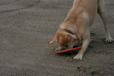 Frisbee fun for Cooper