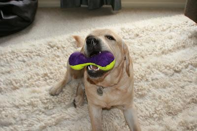 Cooper's new toy