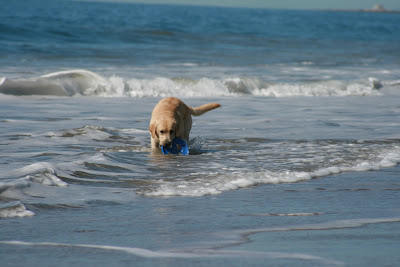 Pup Cooper in the surf