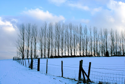 Snowy Crowborough tree line