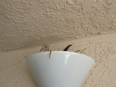 Condo bird nest