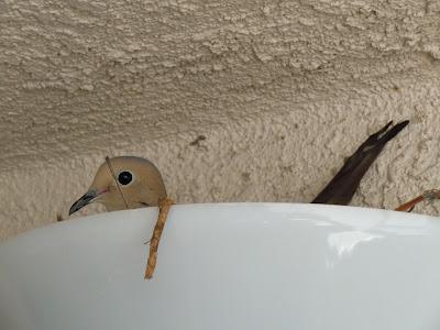 Light bird nest