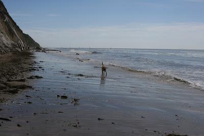Puppy having fun at Hendry's Beach