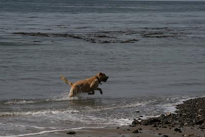 Splashing through the waves at Hendry's beach