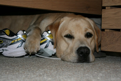 Pup Cooper under the bed