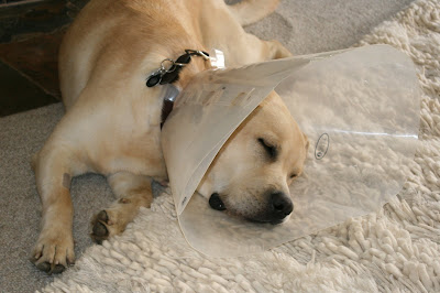 Sleepy cone head pup
