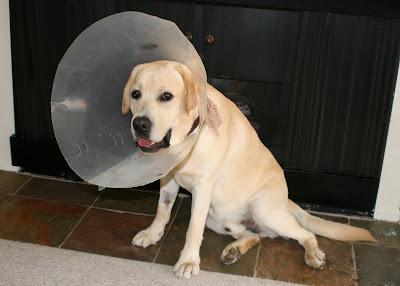 Dopey cone head Cooper