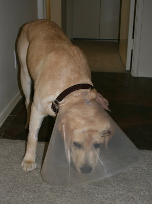 Lamp shade Labrador