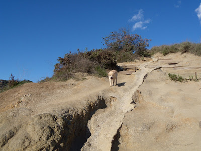 Walking pup off leash at Runyon Canyon