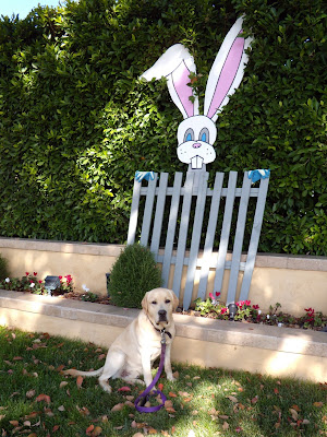 Happy Easter puppy