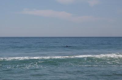 Dolphin fin at Zuma Beach, Malibu