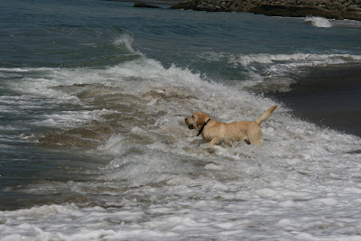 Pup splashing through the surf