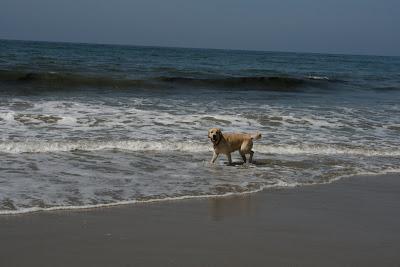 Fun at Arroyo Burro Dog Beach