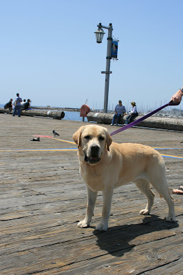 cooper on Stearns Wharf, Santa Barbara