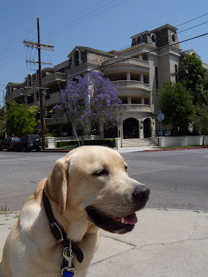 Cooper in blooming West Hollywood