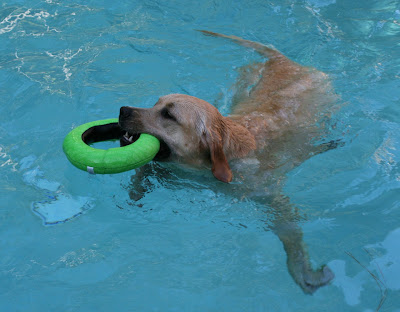 Cooper's pool toy fun