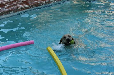 Pool fun pup