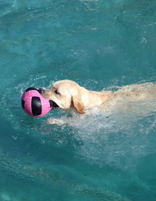 Cooper and his pool toy