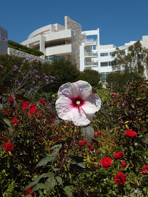 Getty Center beautiful flowers