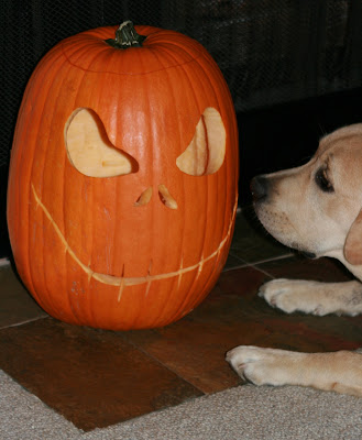 Halloween Pumpkin and pup
