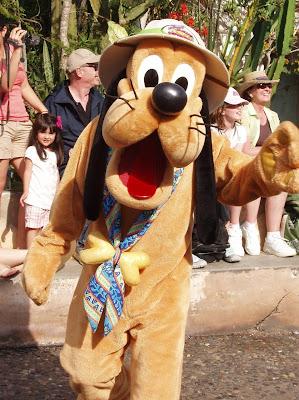Safari Pluto