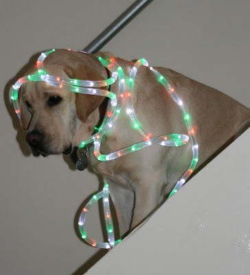 Cooper Christmas lights