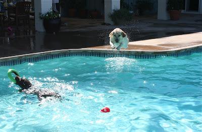 Super dog Cooper