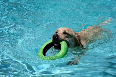 Swimming pool fetch fun