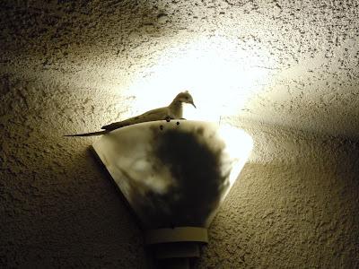 Bird's nest hatchling