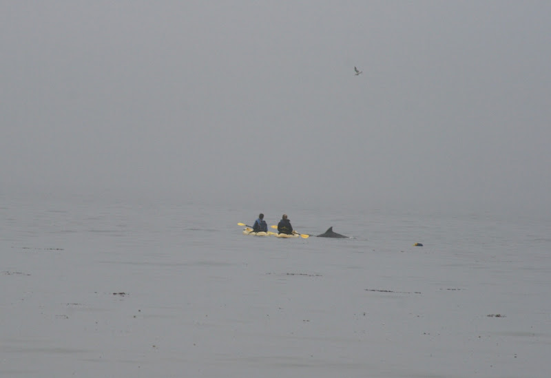Dolphins and kayaks Hendry's Beach