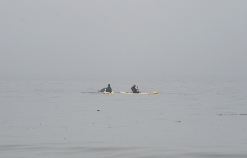 Hendry's Beach kayaks and dolphins