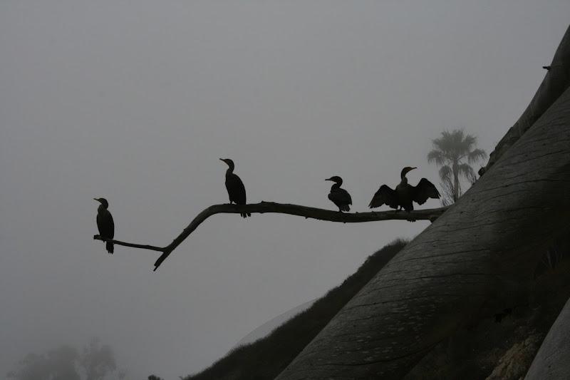 Hendry's Beach shore birds