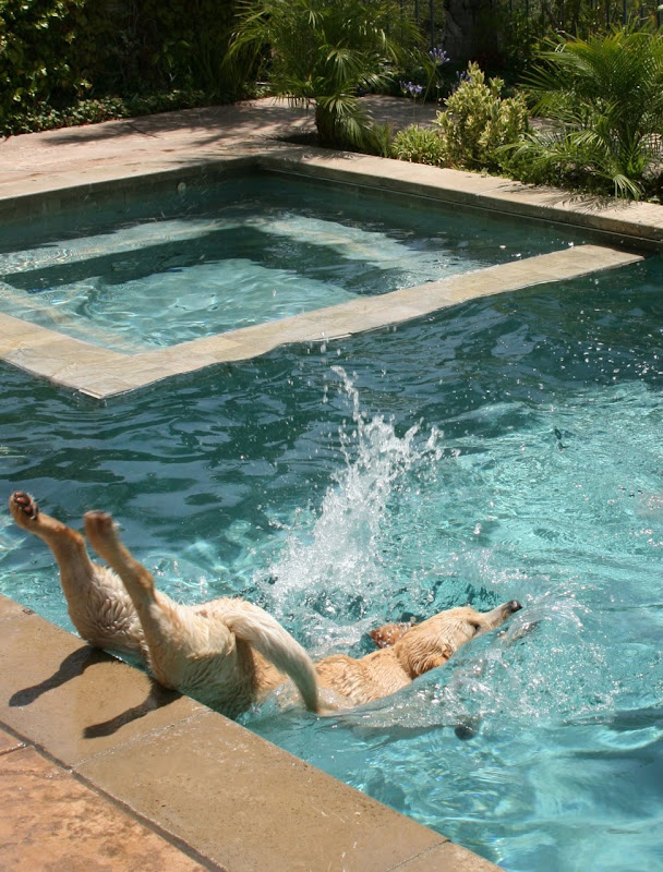 Labrador pool Cooper Jul 09