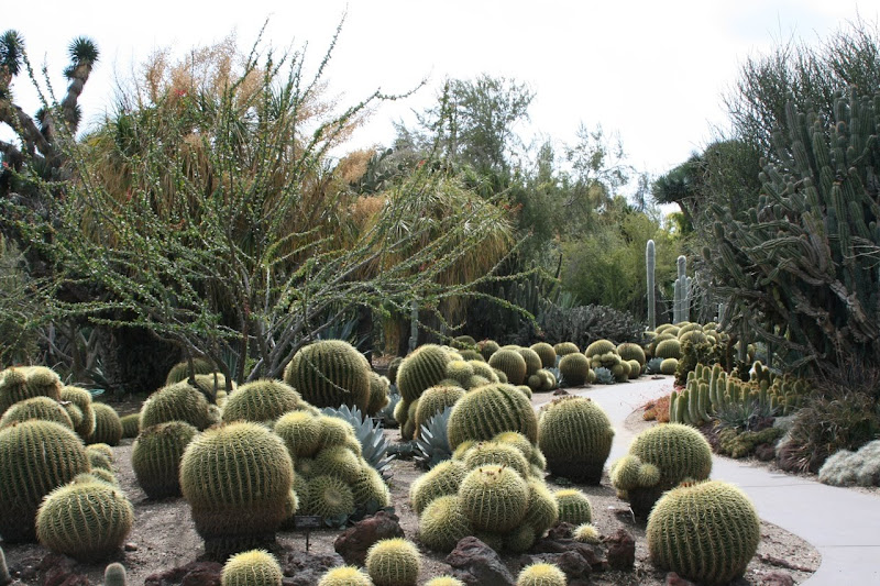 Huntington cactus garden