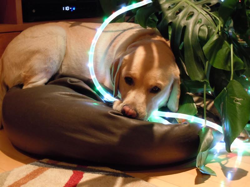 Beanbag lights Cooper