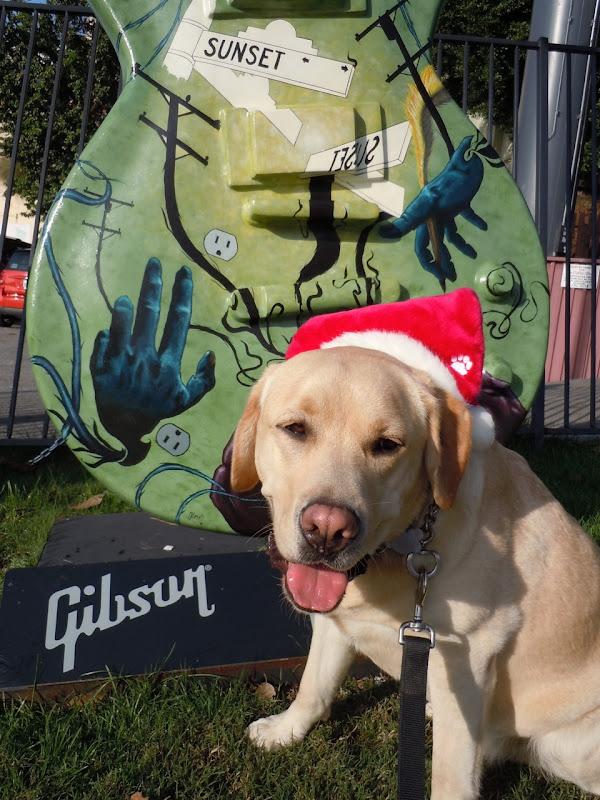 Festive pup GuitarTown Sunset Strip 2010