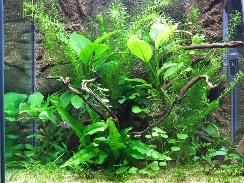 My ricettarium albero di natale 2010 ed acquario for Comprare un acquario