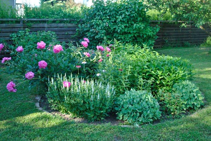 trädgård blommor på nätet