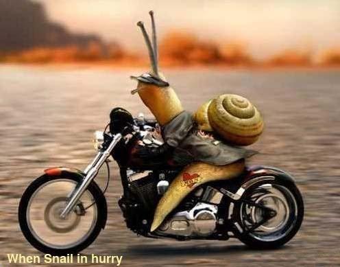 http://4.bp.blogspot.com/_GLP7iMQs-Vs/S-ROcYT8ZzI/AAAAAAAAAnk/KOppofg3eV0/s1600/snail.JPG