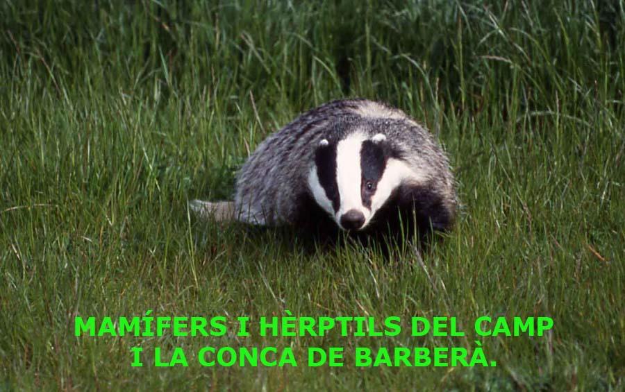 Fauna del Camp i la Conca.