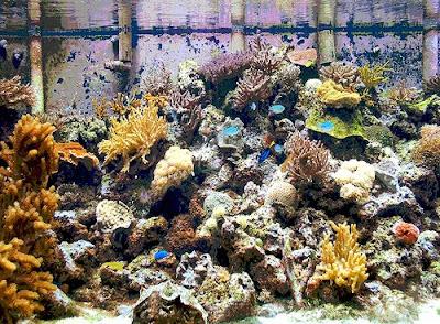 aquarium lore saltwater aquarium setup saltwater tanks 400x294