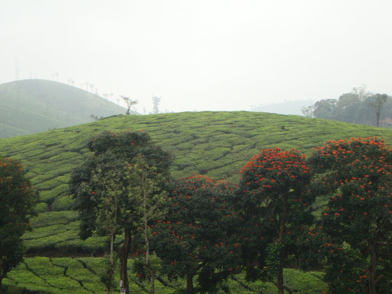 Amazing Kerala Peerumedu Idukki