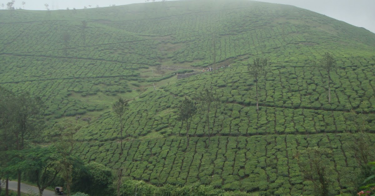 Amazing Tourist Place In Kerala Stunning Places